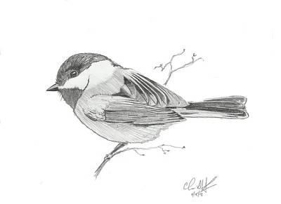 Chickadee Drawing - Chickadee #1 by Christopher Hughes