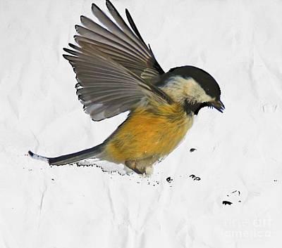 Chickadee Digital Art - Chickadee 22 by Robert Pearson