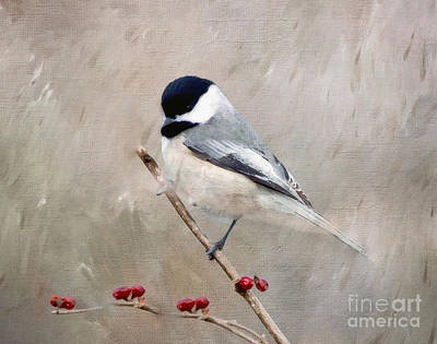 Photograph - Chickadee And Berries by Kerri Farley