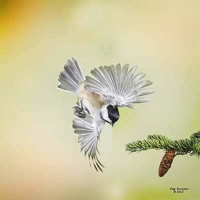 Photograph - Chickadee And Cone by Peg Runyan