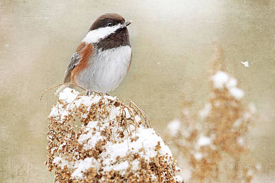 Chickadee And Falling Snow Art Print by Peggy Collins