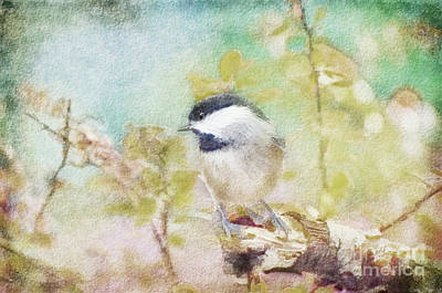 Photograph - Chickadee And The Hiding Caterpillar - Digital Paint 4 by Debbie Portwood
