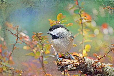 Photograph - Chickadee And The Hiding Caterpillar by Debbie Portwood