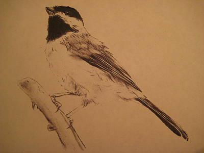 Chickadee Drawing - Chickadee by Arianna Sedota