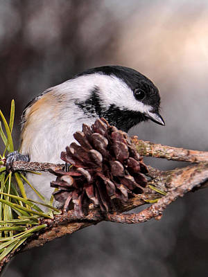 Photograph - Chickadee At Sundown by Theo