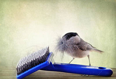 Photograph - Chickadee At Work by Trina  Ansel