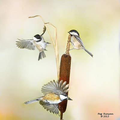 Photograph - Chickadee By Three by Peg Runyan