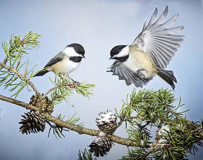 Photograph - Chickadee Chums by Peg Runyan