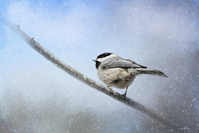 Chickadee In The Snow Print by Jai Johnson
