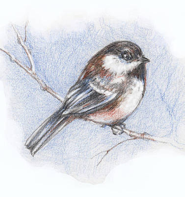Colored Pencil Mixed Media - Chickadee In Winer  by Peggy Wilson