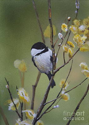 Painting - Chickadee  by Margit Sampogna