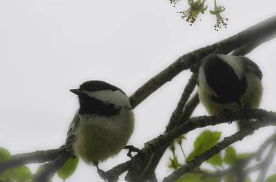 Photograph - Chickadee-pair-whiteblurred by Rae Ann  M Garrett