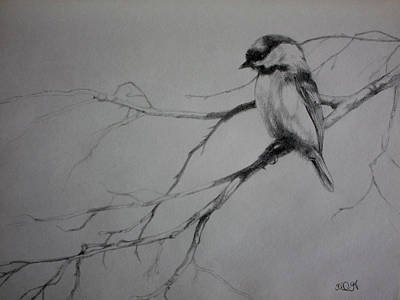 Chickadee Sketch Art Print by Derrick Higgins