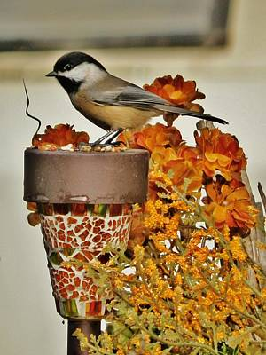 Photograph - Chickadee Still-life by VLee Watson