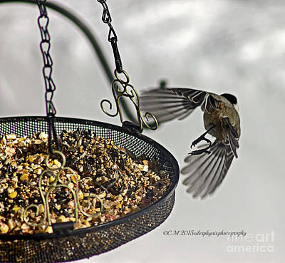Fruits And Vegetables Still Life - Chickadee Take Off by Catherine Melvin