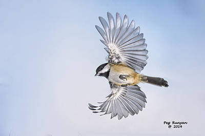 Photograph - Chickadee Undercarriage by Peg Runyan