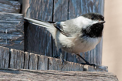 Photograph - Chickadee by WB Johnston