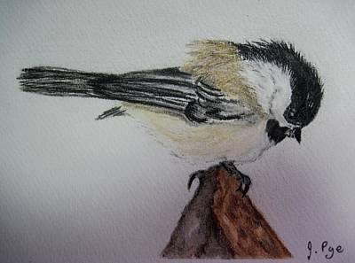 Pastel - Chickadee With Attitude by Joan Pye
