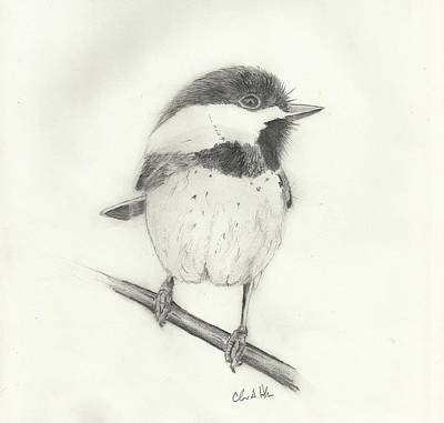 Chickadee Drawing - Chickadee#2 by Christopher Hughes