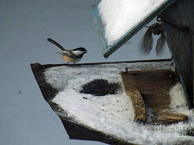 Photograph - Chickadees Conversing by Brenda Brown