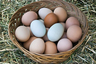 Photograph - Chicken Eggs In Basket by Inga Spence