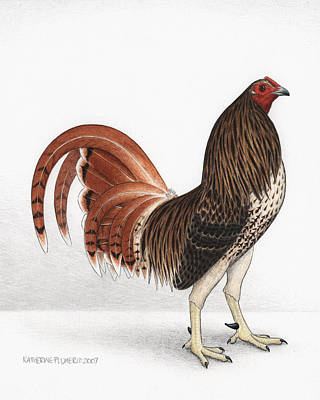 Hawk Drawing - Chicken Hawk by Katherine Plumer