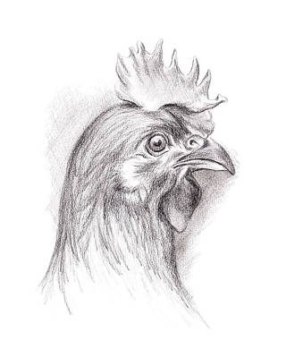 Drawing - Chicken Portrait In Charcoal by MM Anderson