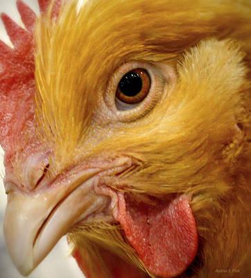 Chicken Vision Art Print
