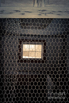 Birds Rights Managed Images - Chicken wire on a door of an old chicken coop Royalty-Free Image by Edward Fielding