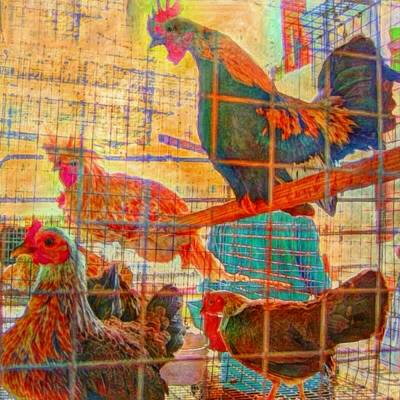 Painting - Chickens At The Ag Fair - Square by Lyn Voytershark