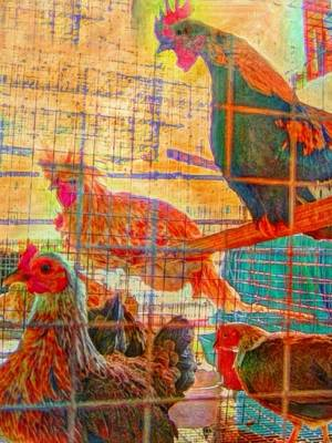 Painting - Chickens At The Ag Fair - Vertical by Lyn Voytershark