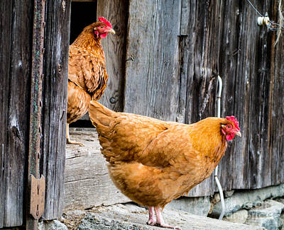 Chickens At The Barn Art Print by Edward Fielding