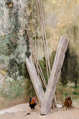 Photograph - Chickens In The Corner In Havana Cuba by Rob Huntley