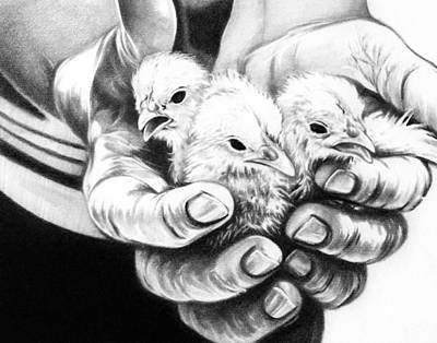 Three Chicks Drawing - Chickens by Natasha Denger