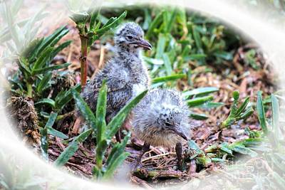 Photograph - Chicks by Rachael Shaw