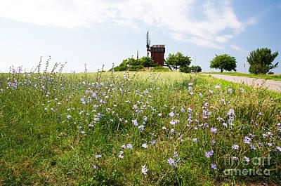 Photograph - Chicory Flowers by Kennerth and Birgitta Kullman
