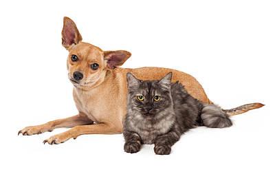 Chihuahua Dog And Gray Cat Art Print