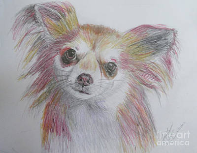 Drawing - Chihuahua by Lyric Lucas