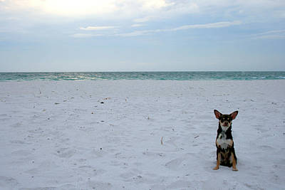Chihuahua On The Beach Art Print by Georgia Fowler