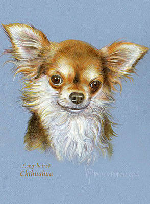 Drawing - Chihuahua Puppy Portrait  by Victor Powell