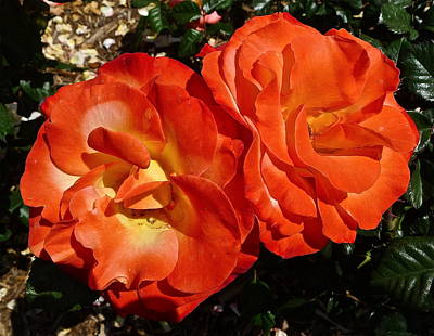 Photograph - Chihuly Roses by Denise Mazzocco