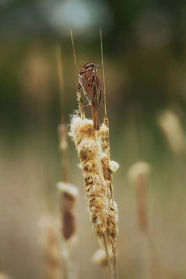 Photograph - Chilaxing On Cattail by Linda Tiepelman