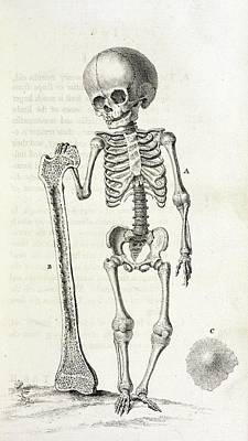 The Human Body Photograph - Child Skeleton by British Library