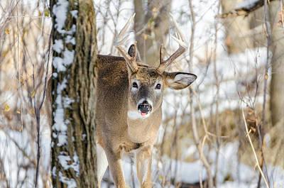 Photograph - Childish Buck by Steven Santamour