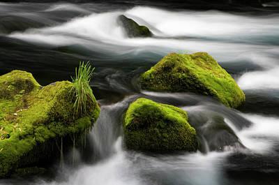 Andes Wall Art - Photograph - Chile South America Moss-covered by Scott T. Smith