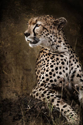 Chill Cheetah Art Print by Mike Gaudaur