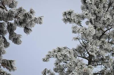 Chill Tree Art Print