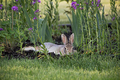 Chillaxin' - Wild Bunny - Casper Wyoming Original