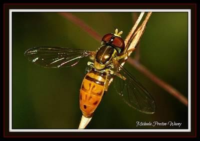 Bees Photograph - Chilling by Michaela Preston
