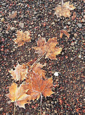 Chilly Leaves 1 Art Print